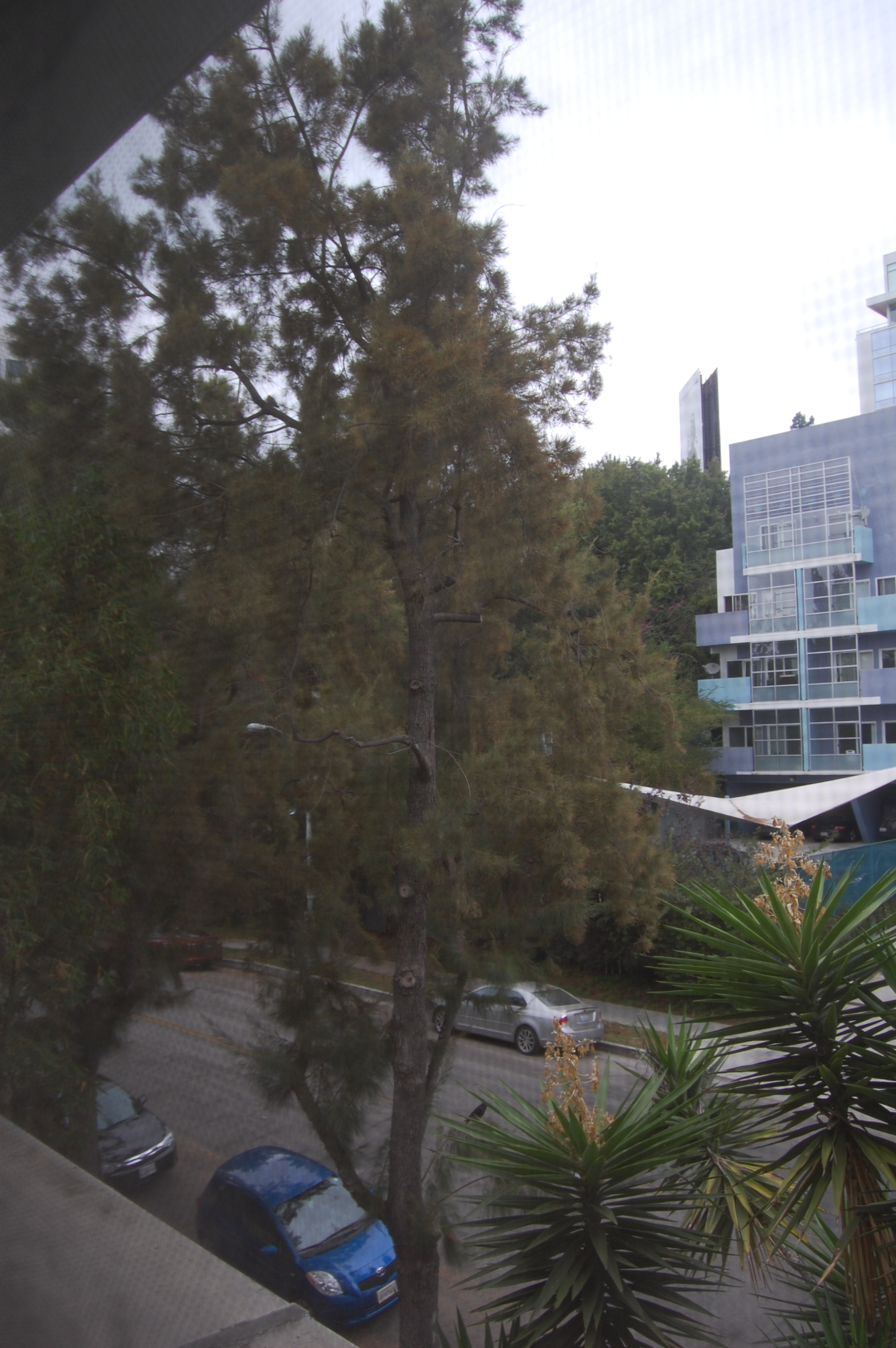 House of Blues, Sanset Blvd, West Hollywood -- view from De Longpre Ave